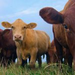 Livestock Tracking & Management System